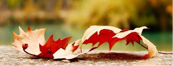 Autumn investor newsletter